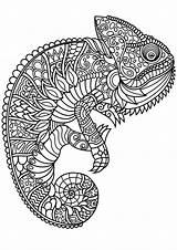 Coloring Complex Patterns Chameleon Adult Mandala Chameleons Dog Animal Sheets Printable Pdf Horse sketch template