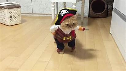 Costume Sun Cats Animal Dogs Walking Pirate