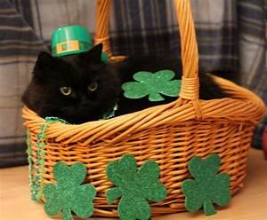 Love, Joy and Peas: Funny St. Patrick's Day Cat Photos