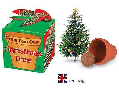 grow your own tree kit grow your own tree seeds novelty gift filler 163 0 99 picclick uk