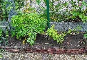 Beet Vor Terrasse Anlegen : thuja hecke pflanzen und pflegen der wohnsinn ~ Lizthompson.info Haus und Dekorationen