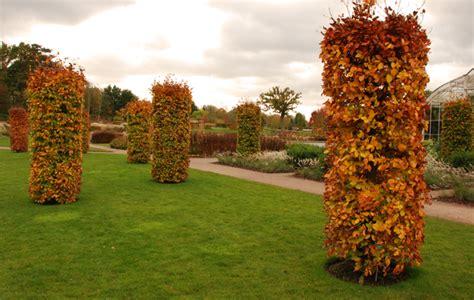 Gardens For Autumn Colour  Lisa Cox Garden Designs Blog