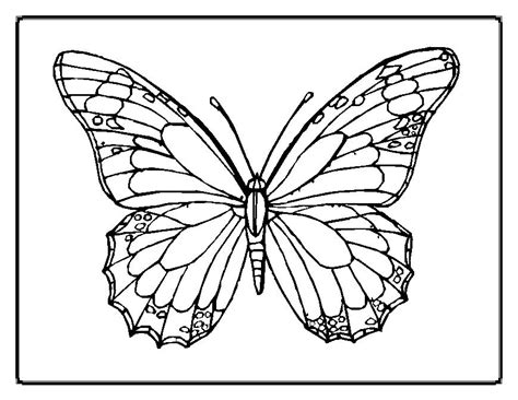 butterfly coloring pages learn  coloring
