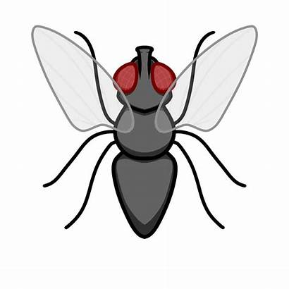 Clipart Fly Insect Transparent Animated Webstockreview Atomic