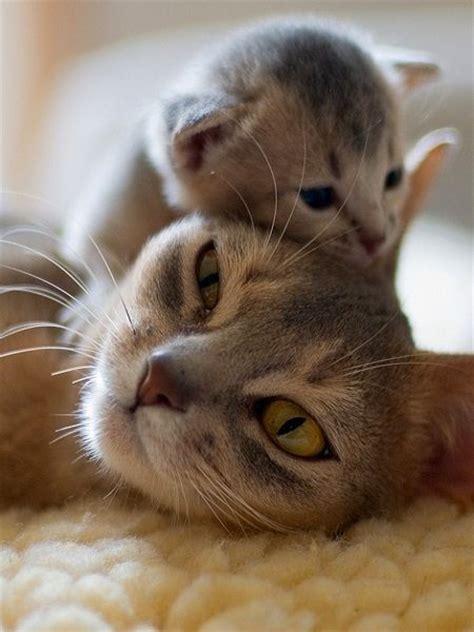 Cats Resumen by Animales Resumen Perfectamente Lo Que Es La Maternidad Taringa