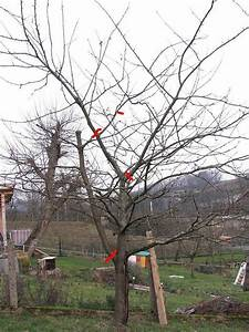 Kirschbaum Richtig Schneiden : kirschbaum rei t auf edit er ist geschnitten page 3 ~ Lizthompson.info Haus und Dekorationen