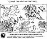 Coral Reef Coloring Pages Ocean Worksheets Marine Biology Web Community Worksheet Organisms Plants Easy Adult Printable Lionfish Preschool Sheets Sheet sketch template