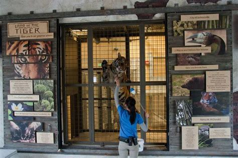 jacksonville zoo tiger training doors outdoor donor