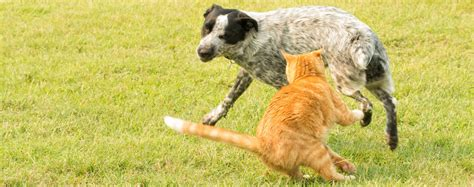 dogs chase cats wag