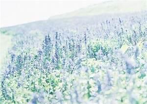 light blue flowers | Tumblr