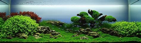 aquascaping les plus beaux aquariums