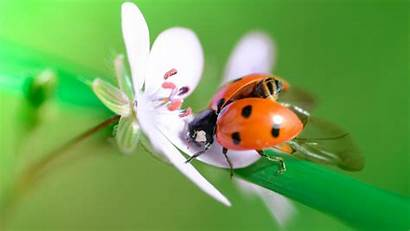Spring Bug Lady Macro Flower Wallpapers Wallpapermaiden