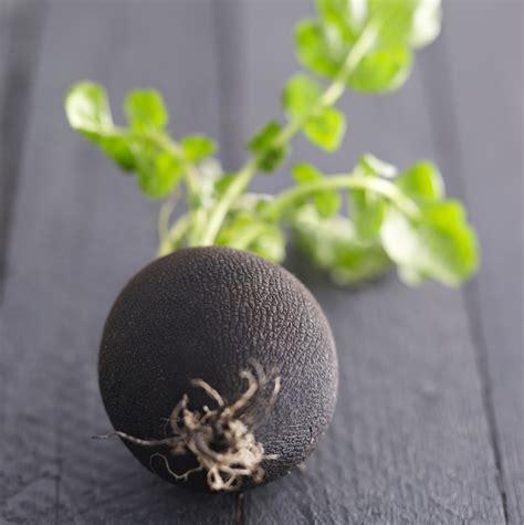 cuisine radis noir radis noir recettes vidéos et dossiers sur radis noir