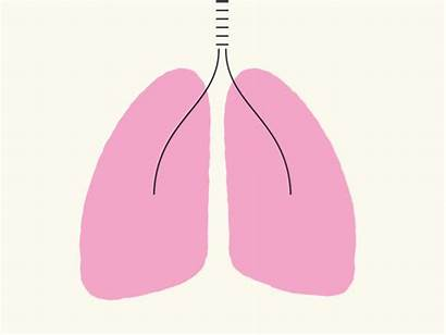 Lungs Asthma Animation Air Breath Animations Take