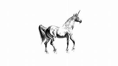 Unicorn Wallpapers Funny 1080 1920 Hdwallpaper Nu