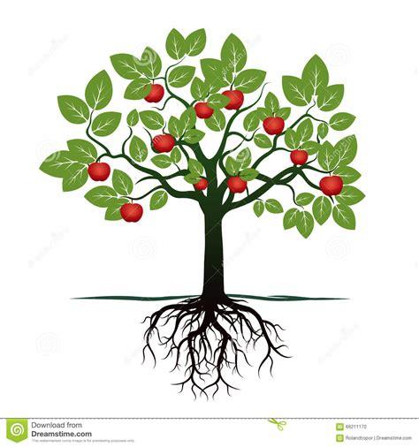 baum mit herzblättern junger baum mit gr 252 nen bl 228 ttern wurzeln und roten 196 pfeln stock abbildung illustration