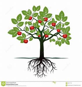 Young Tree With Green Leafs, Roots And Red Apples Stock