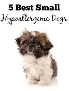 best 25 small hypoallergenic dogs ideas on pinterest