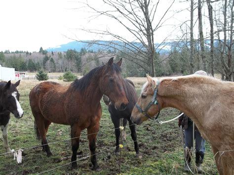 horses emotional lives horse curiosity senior