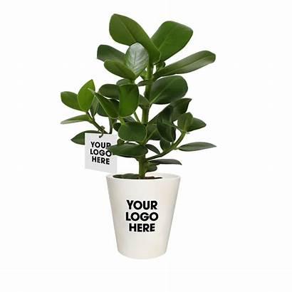 Plant Luchtzuiverende Ogreen Cadeauxperts Pot