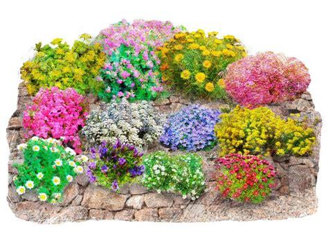pflanzen für trockenmauer set beet balkonpflanze 187 trockenmauer 171 12 tlg otto
