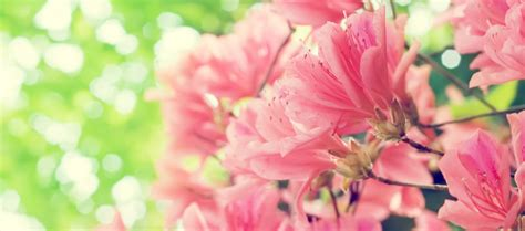 Facebook Fan Page Cover  Beautiful Spring Flowers