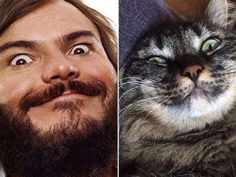 Cats That Look Like Celebrities Animals