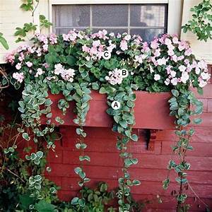Blumenkästen Bepflanzen Ideen : ideen f r fenster blumenkasten originelle vorstellungen balkon blumenkasten fenster ~ Eleganceandgraceweddings.com Haus und Dekorationen