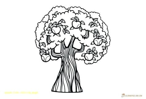 Fig Tree Coloring Page At Getcolorings.com
