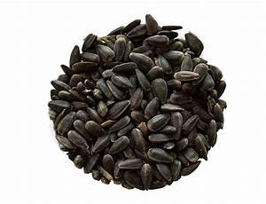 Graines De Tournesol Pour Oiseaux : rosenl cher graines de tournesol noires pour oiseaux ~ Farleysfitness.com Idées de Décoration