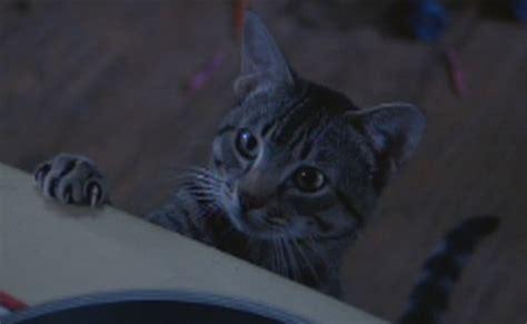 Cat's Eye (1985)  Cinema Cats