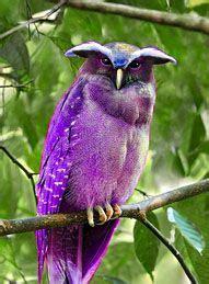 Purple Crested Owl