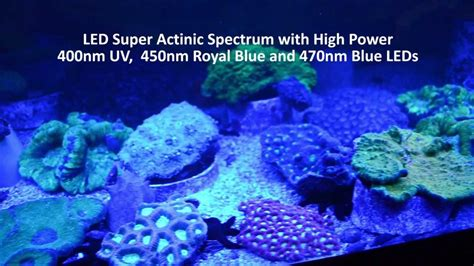 Uv Len Aquarium by Actinic Bulbs Reef Aquarium 1000 Aquarium Ideas