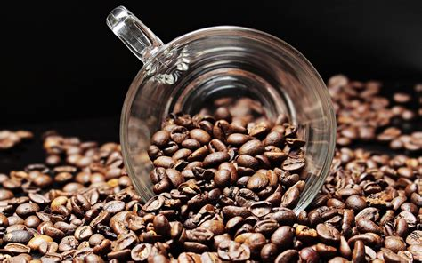 To store your beans correctly you need to keep them in a dry place with no access to air (basically best option is to have a vacuum sealable jar), where there is no direct. Arabica Or Robusta? Birds Love Eating Coffee Beans And Have Preference, Study Says   Tech Times