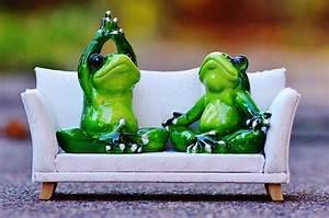 Frosch Bilder Lustig : frosch sofa entspannung kostenloses foto auf pixabay ~ Whattoseeinmadrid.com Haus und Dekorationen