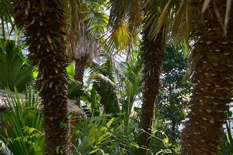 Botanischer Garten Wien Palmenhaus by 187 Palmenhaus Im Botanischen Garten