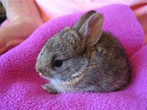 Wild Baby Bunny Rabbits