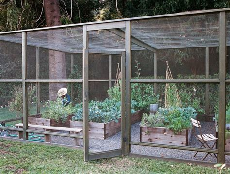 screened in garden with raised beds keeping out birds