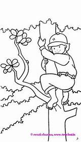 Coloring Pages Clipart Clip Climbing Tree Boy Treehut Boys Childrens Paintings Sheets Eid Rabbit Carrot Museum Sharma Swati sketch template