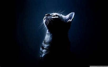 Dark Desktop 4k Wallpapers Background Kitten