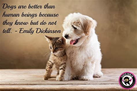 pet dogs quotes dog better than human animal quote emily they beings dickinson tell animals because being grooming scheme know