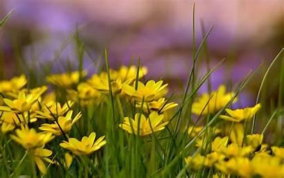 Flowers Field Yellow Background Flower Wild Wallpapers