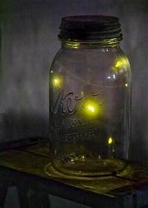 Catching fireflies in a jar | Fireflies | Pinterest