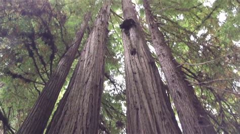 Jedediah Smith Redwoods State Park In Northern California