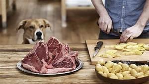 Kartoffeln Für Hunde : k nnen hunde kartoffeln essen sind kartoffeln sicher f r hunde haustiere welt ~ A.2002-acura-tl-radio.info Haus und Dekorationen