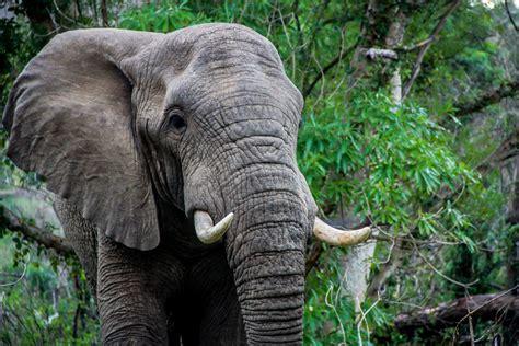 world elephant day painting fundraiser global