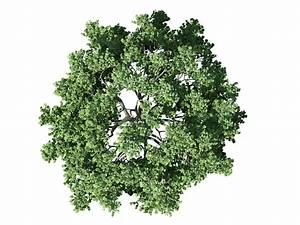 Tree, Plan, Vector, Free, Download, At, Getdrawings
