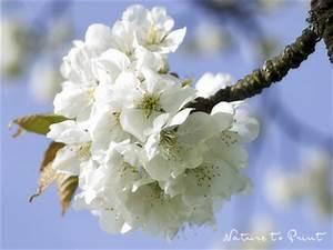 Welche Bäume Blühen Jetzt : barbarazweige f r fortgeschrittene jetzt sammeln richtig vorbereiten ~ Buech-reservation.com Haus und Dekorationen