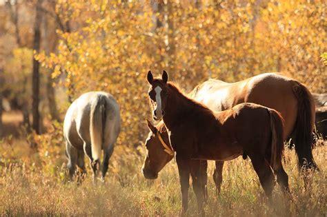 horses wagonhound livestock land cutting ranch famous