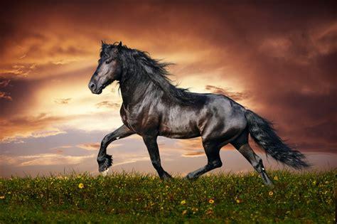 ausmalbilder pferde kostenlose malvorlagentvcom